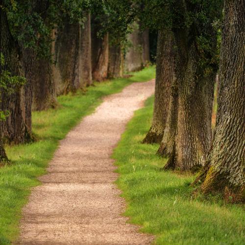 Path through